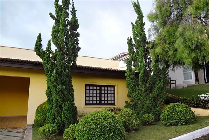 kaizuka-juniperus-chinensis-torulosa-1