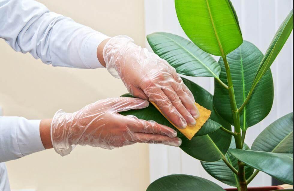 limpar-as-plantas