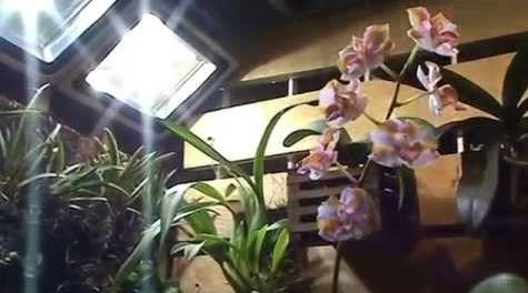 luminosidadeparaorquídea