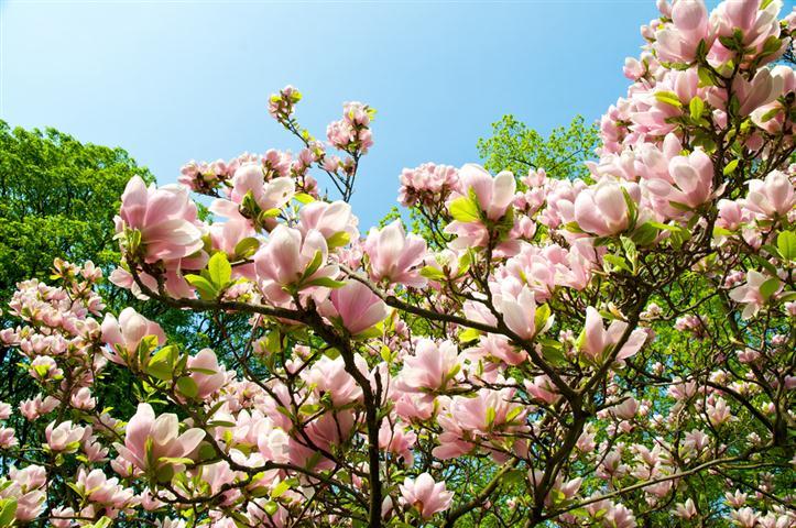 magn lia plantasonya o seu blog sobre cultivo de