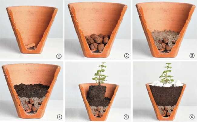 modo-de-plantar-em-vasos2