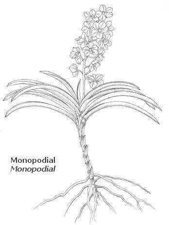 monopodial