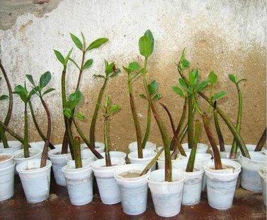 mudas-e-plantas