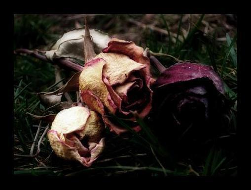 murchas_flores