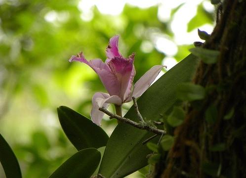 orquídea em árvore