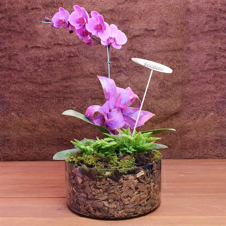 orquídea-vaso