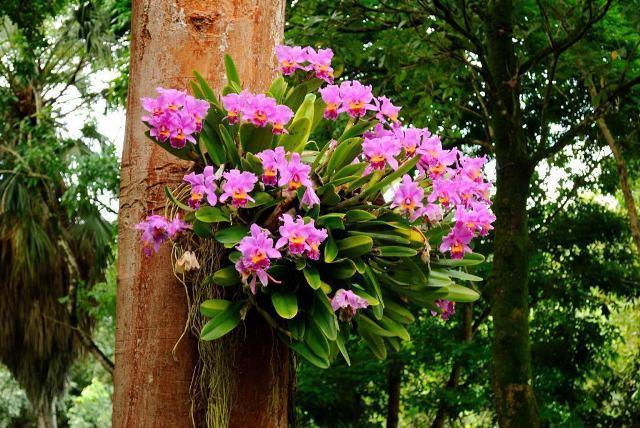 orquídea1
