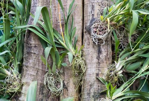 orquídeas1