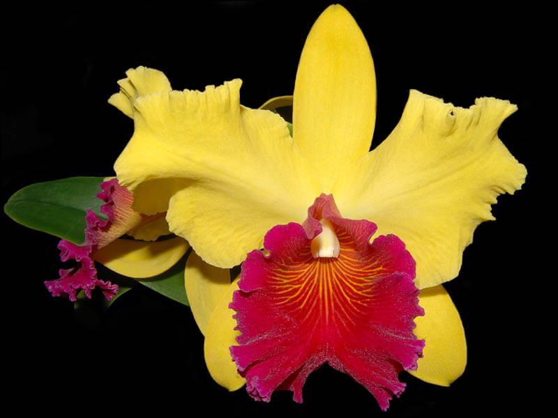 orquidea-8