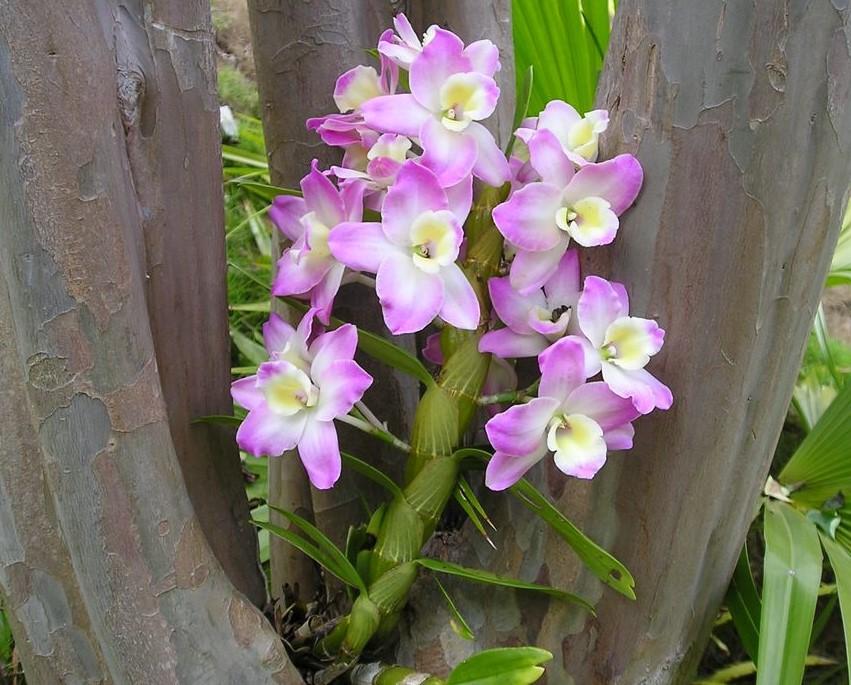 orquidea natureza