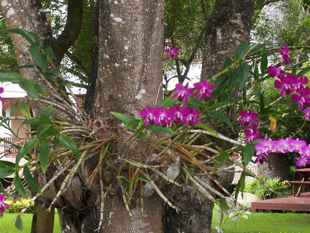 orquidea_3