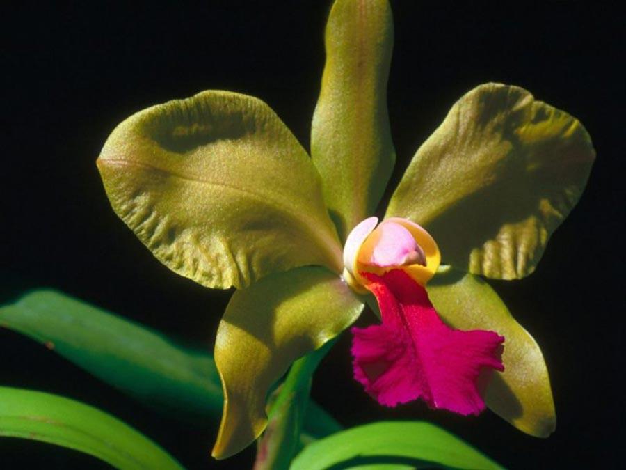 orquideas-