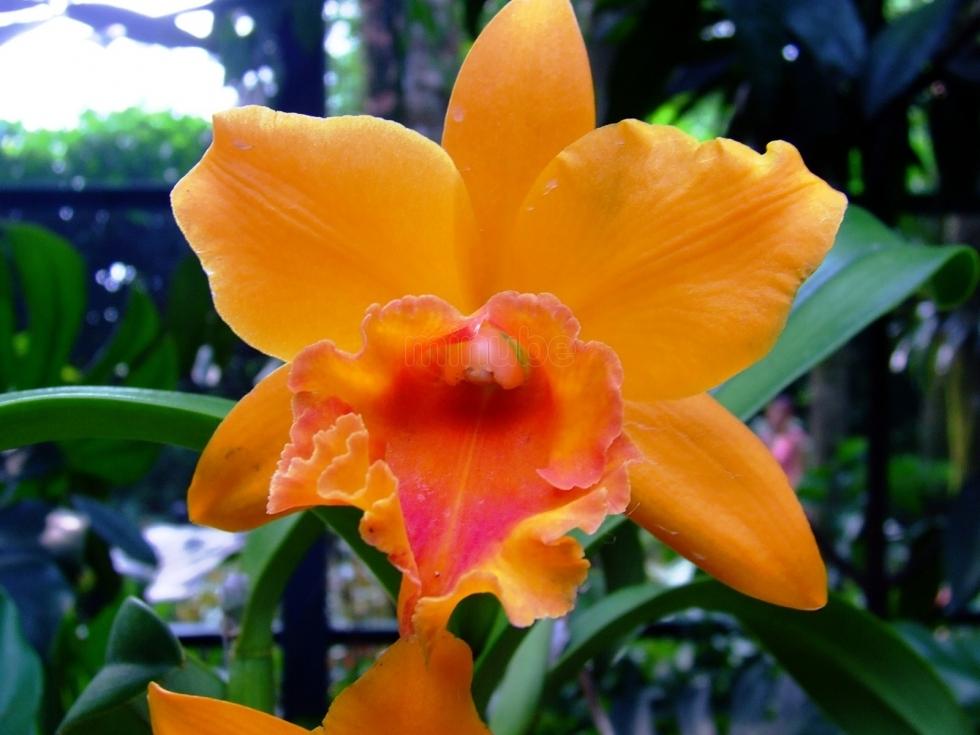 orquideas-_3704911