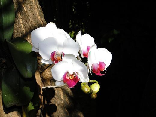 orquideas-em-arvores-como-plantar
