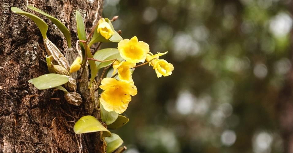 orquideas sobre-cascas-rugosas-e-grossas