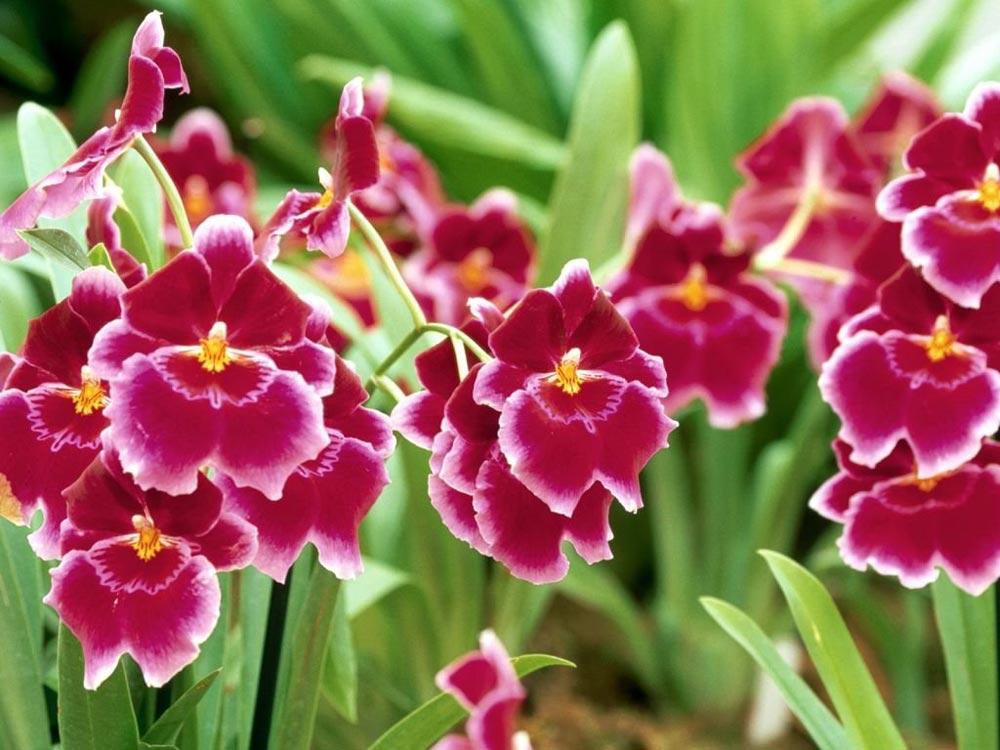 orquideas.2