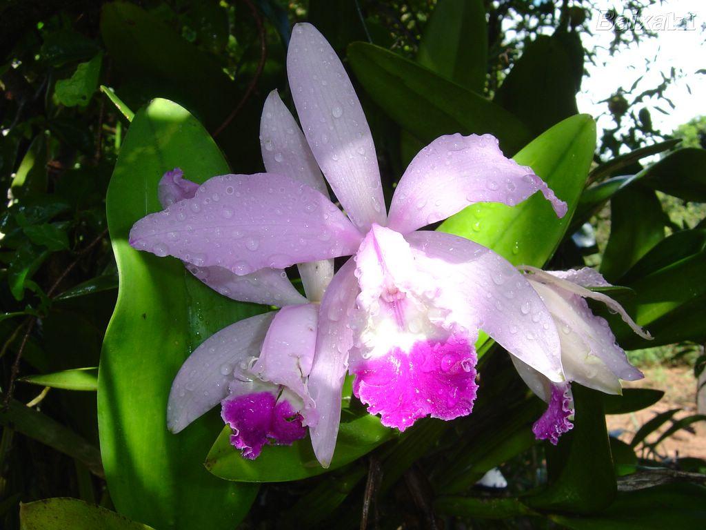 -orquideas