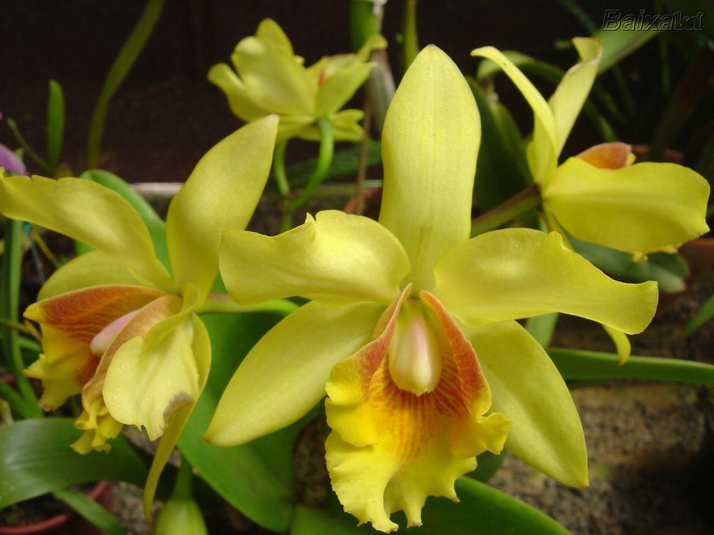 -orquideas800