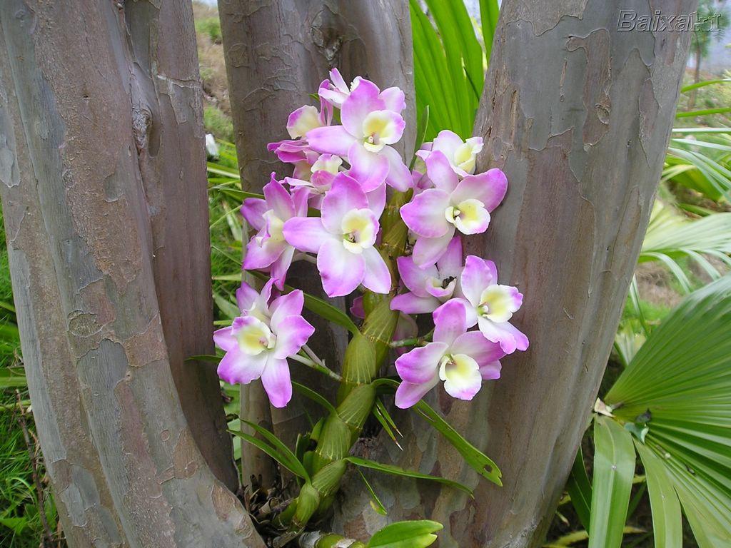 orquideas_005