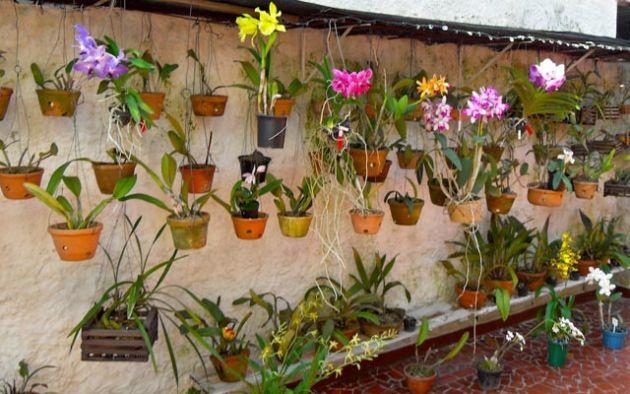 orquideas_jardim