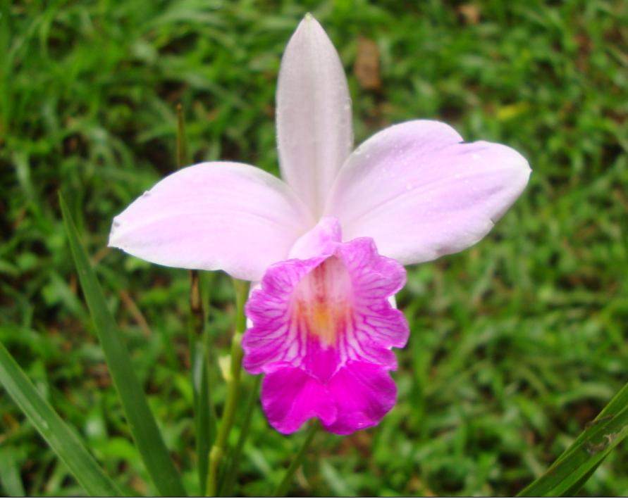 orquidia-pau
