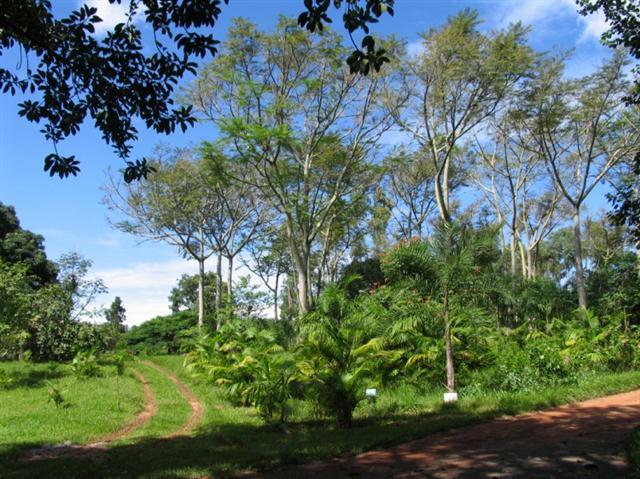 paisagismo rural (Small)