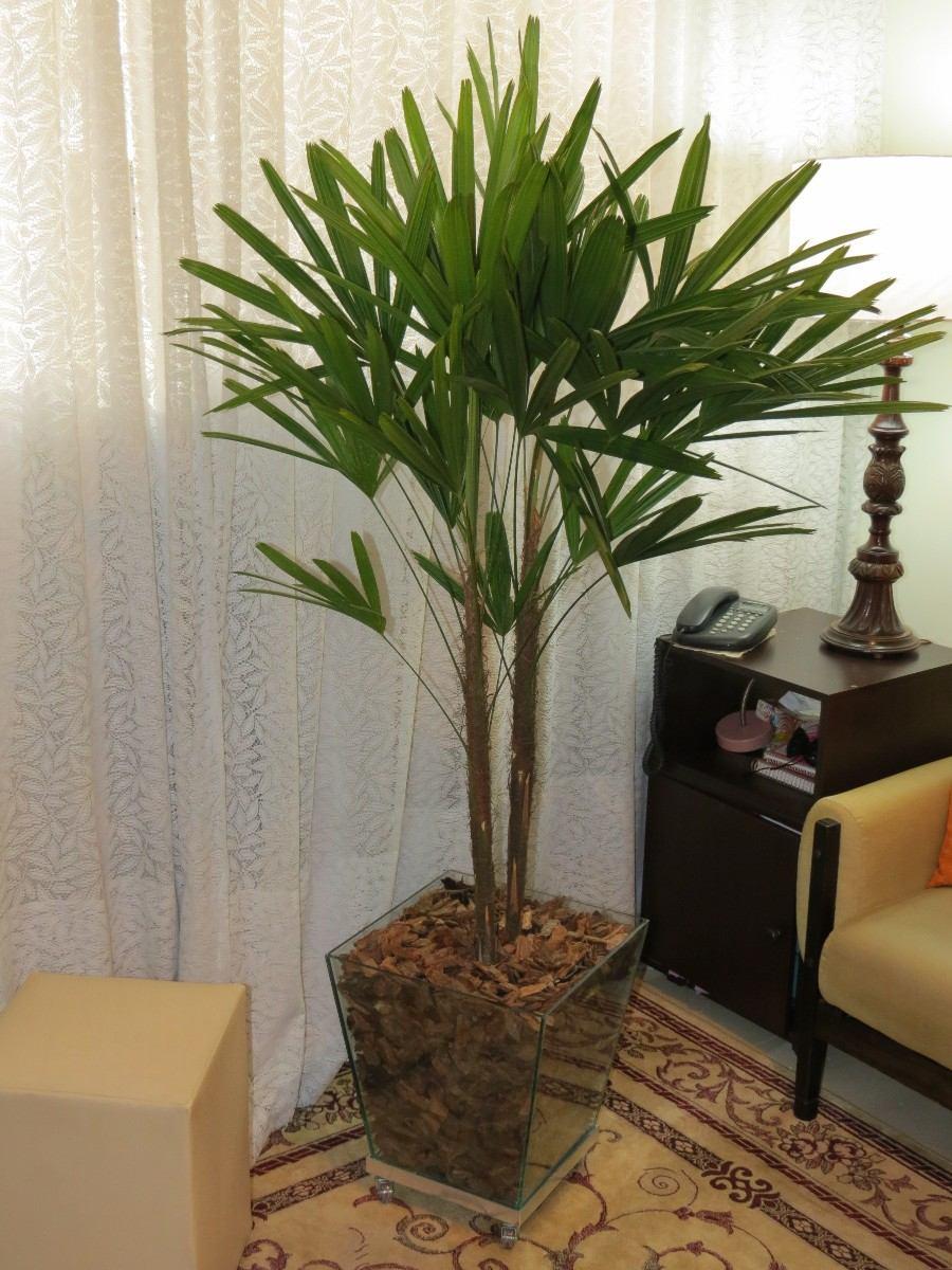 Interior e paisagismo plantasonya o seu blog sobre - Plantas de interior comprar ...