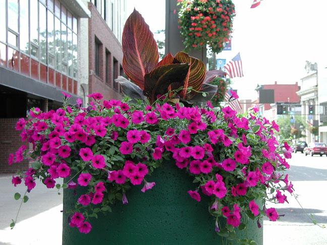 cuidar  PlantaSonya  O seu blog sobre cultivo de plantas e flores