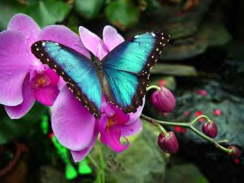 phalaenopsis 108