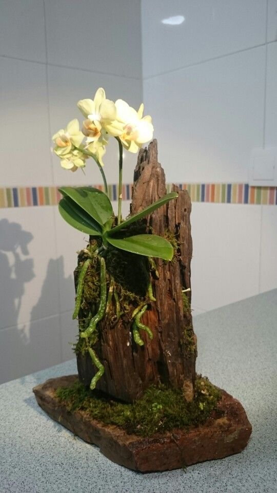 Cultivo de orqu deas em troncos pequenos plantasonya o - Decoracion troncos madera ...