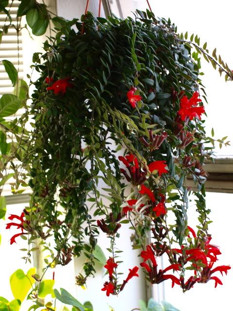 planta-batom