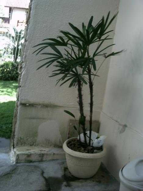 de interior  PlantaSonya  O seu blog sobre cultivo de plantas e