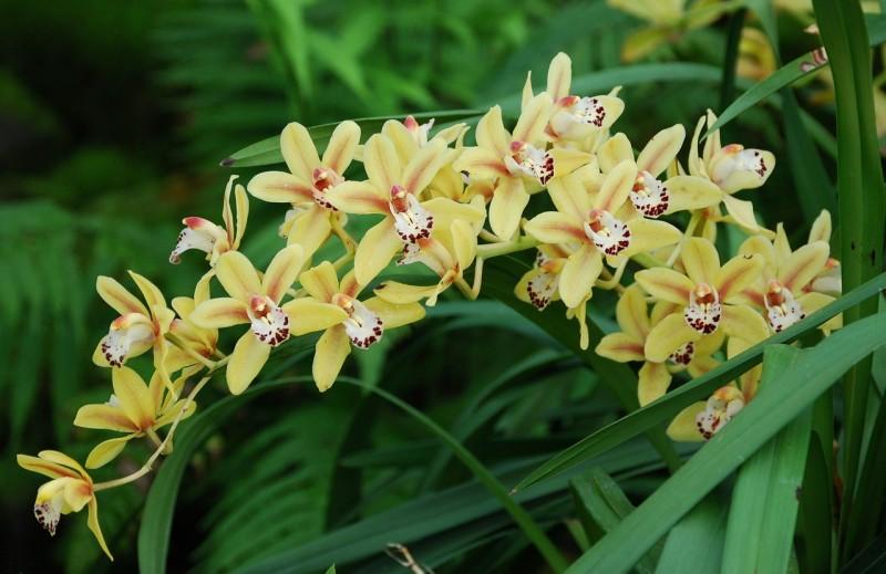 planta-ornamental19