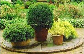 planta vaso_
