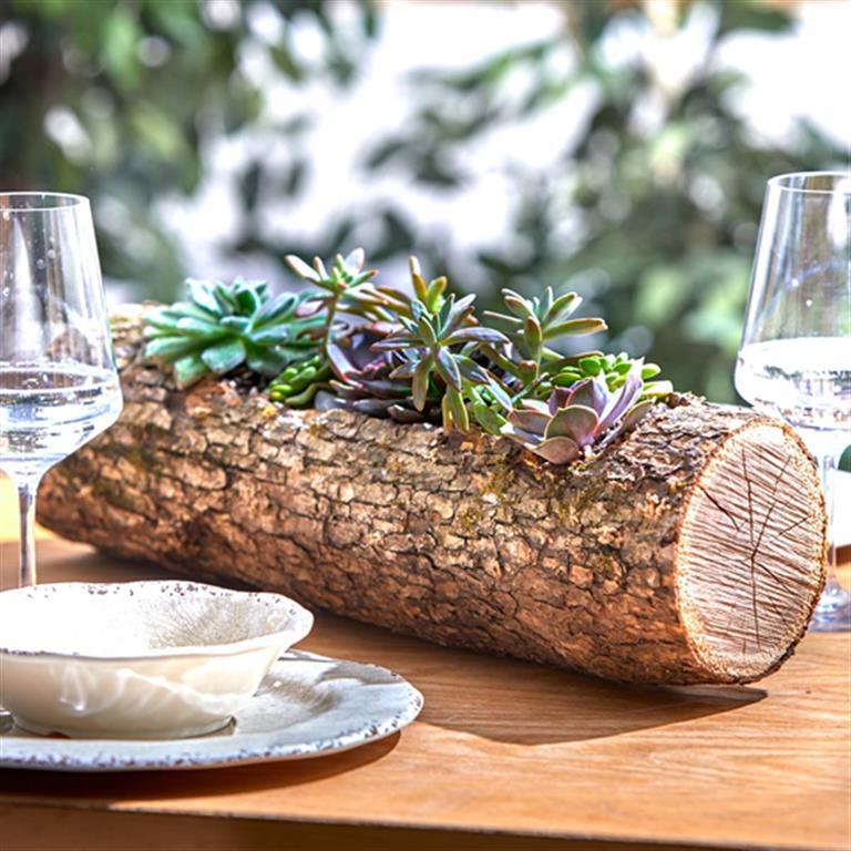 plantar-suculentas-na-madeira