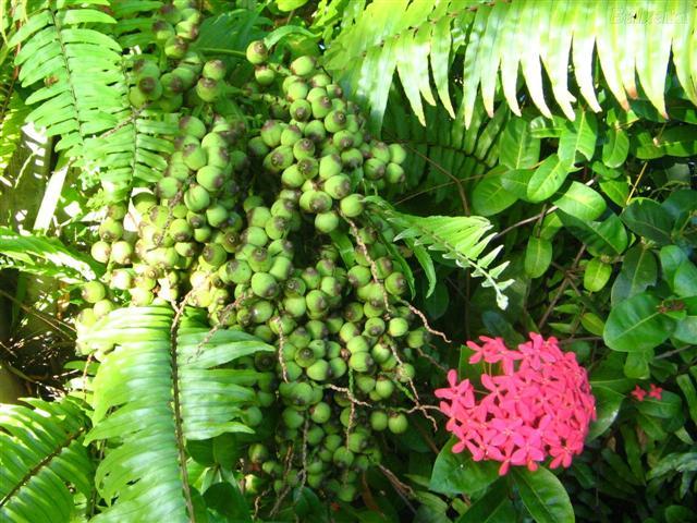 plantas (Small)