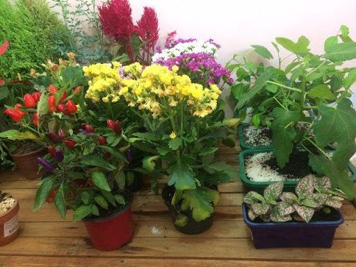 plantas adubadas