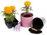 plantas-de-interior-
