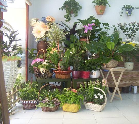 plantas-de-interior-2