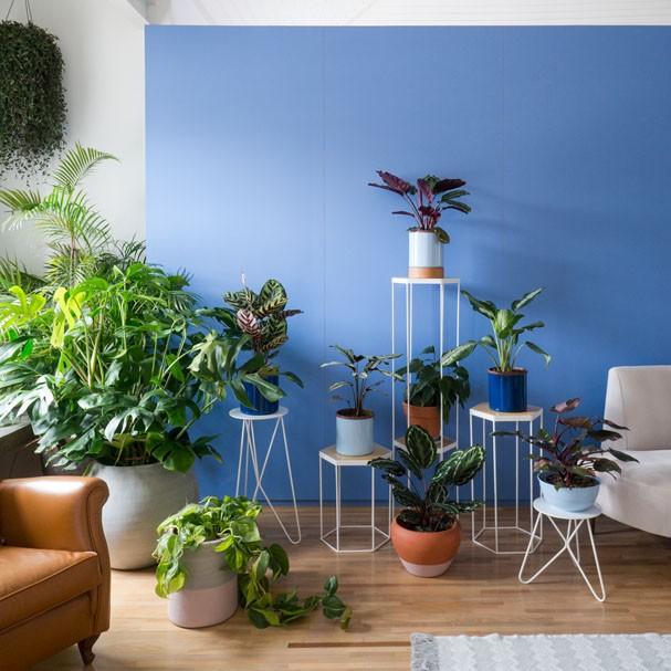 plantas-dentro-de-casa-05