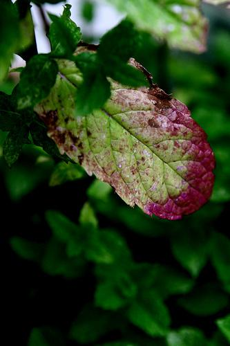 -plantas-doentes