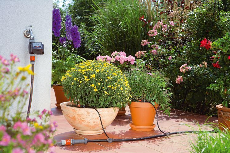 plantas em terraços