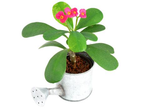 plantas-em-vasos-