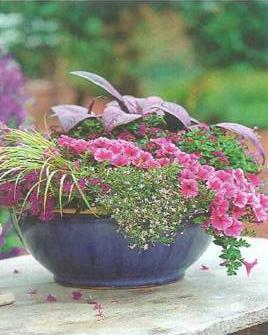 plantas em-vasos-