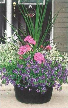 plantas-em-vasos-1