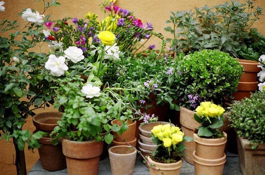 plantas-em-vasos