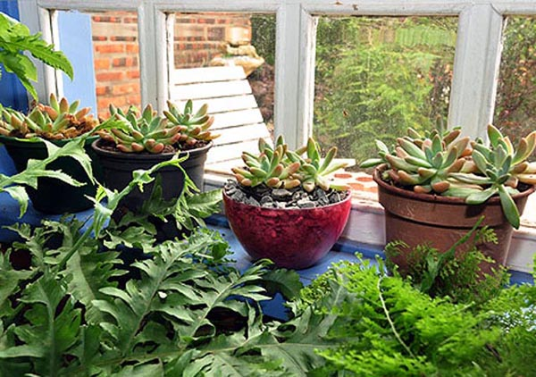 plantas envasadas