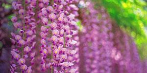 plantas-folhagens-flores