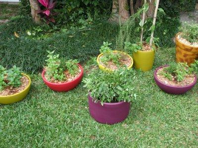 plantas medicinais 026