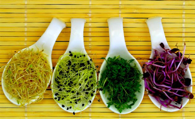 plantas-medicinais-6